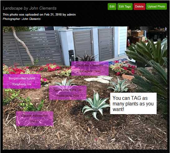 My Profile on the Mulch