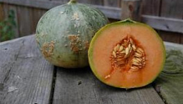 Melon from Seed