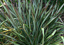 Phormium Monthly Plant Care