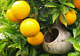 Oranges Monthly Plant Care